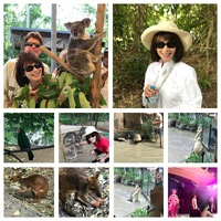 Tour of a park with koalas, kangaroos, wallabies and a crocodile show.