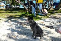 Stray dog in Isle of Pines