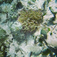 The coolest bit of sea life we saw when Snorkeling off Punta Sur (aside fro