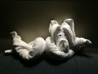 One of the great towel animals waiting for us in our cabin each evening !