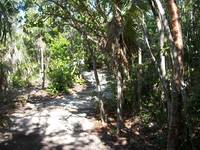 Coco Cay Nature Trail Hike