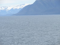Humpback whale tail in Stephen's Passage enroute to Juneau