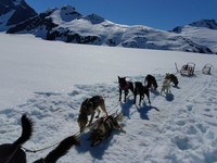 Dog sledding on a glacier was the BEST!  Would highly recommend this shore