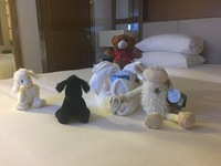 Dharma the Butler had too much fun(towel animals and friends)