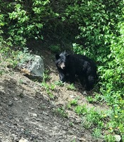 Saw this black bear by the side of the road when we were returning from the