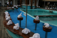 Pool was decorated with multiple towel animals.