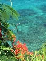 Crystal clear water off Dominica