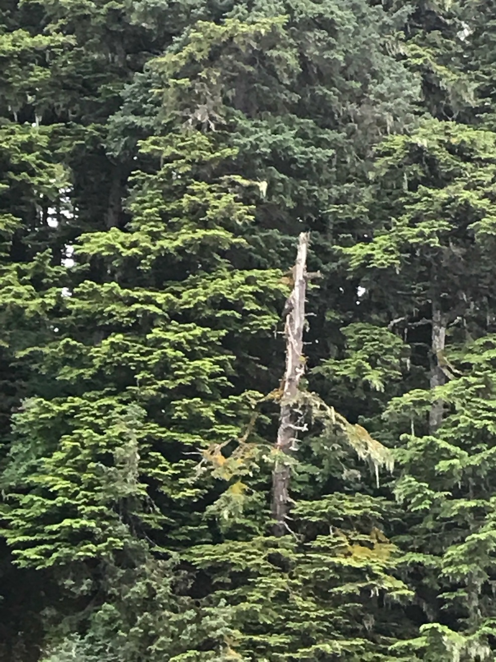 There is something on that dead tree