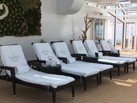 Haven lounge chairs