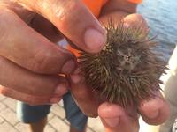 Tony reached into the water and grabbed a sea urchin for us to hold/look at