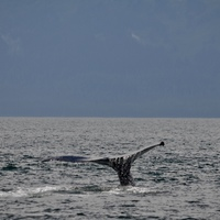 Juneau whale watch