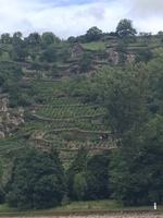 Rhine Gorge terraced vineyard.