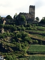 Vineyards and castle on the Rhine