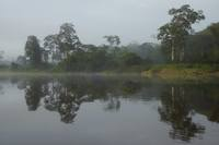 Morning mist in the Amazon region