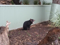 Banarong Animal Sanctuary in Hobart