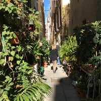 from pur segway tour a very narrow road we visited in Cagliari