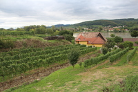 Bike ride through Wachau Valley