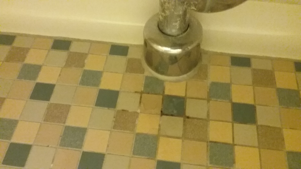 Mold in Bath Grout