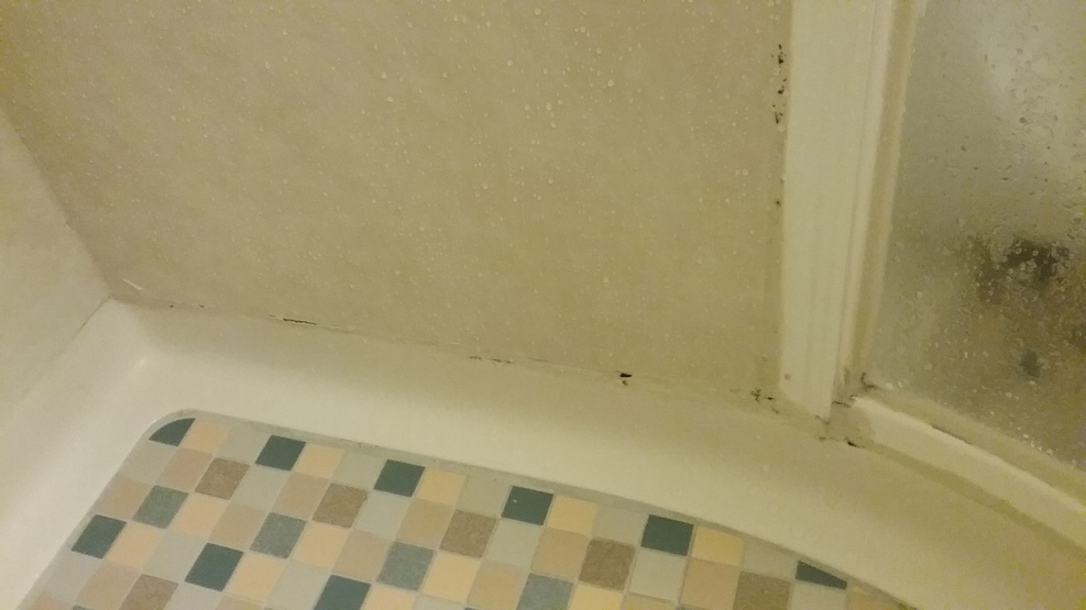 Black Mold Mildew in shower