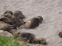 Seal Cubs at Enderby Island