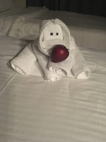 One of our lovely towel animals!