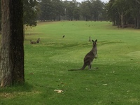 Tea and kangaroo siting. Excellent adventure!