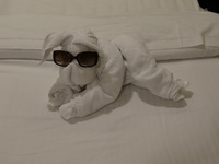 Towel animal in room everyday.