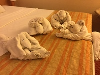 Towel animals that were left in cabin every day