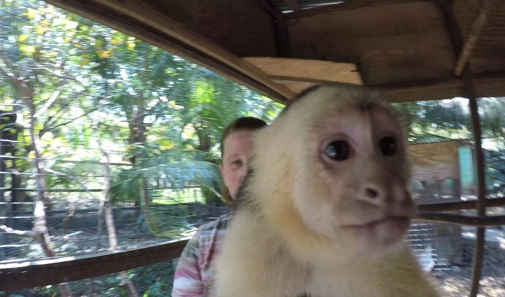 Victor Bodden Canopy Tours monkey.  Yep, you get right into the pen with th