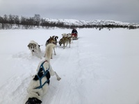 huskies in Kirkenes