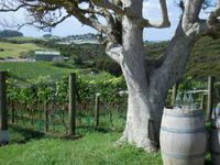Waiheke Island; scene at Batch Winery