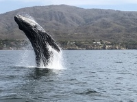 Excursion in Puerto Vallarta. Amazing whale activity.