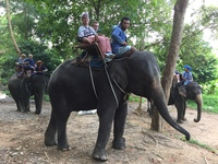 Riding an elephant in thailand. We cruised HAL with our 11 year old grandson.  What an experience.  We rode elephants, rickshaws, gondolas, and had a wonderful adventure in every port!