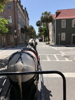 Horse drawn carriage ride in the historic district of sunny Charleston, SC.