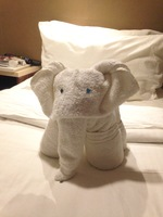 This is a picture of the elephant that Felipe made out of towels.