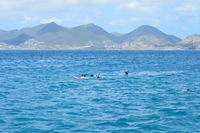 Snorkeling in St. Maarten with Captain Alan's Charters