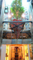 The living tree suspended in the atrium, an item of curiosity!