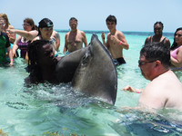 Jayson from Rays, Conch and Reef Snorkel captured a sting ray for everyone