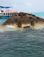 Glass bottom boat cruise. Ship wreck