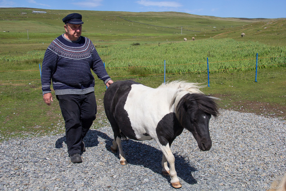 Visit with Shetland Ponies on an excursion in Lerwick.