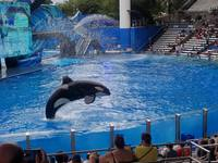 Sea World - Shamu Theatre