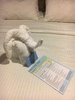 A towel animal and freestyle which gave us the itinerary of available activ