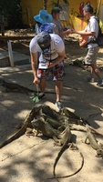 I'm feeding an iguana at the iguana farm in Roatan, Honduras as part of a