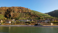 Vineyards on the hillsides along the river Main.  The growers make use of a