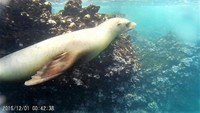 Snorkeling with Sea Lions - They checked us out during several of our snork
