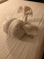 Towel art each night.