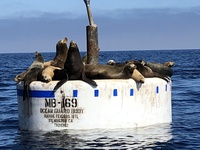 Sea lions off coast of Catalina Island
