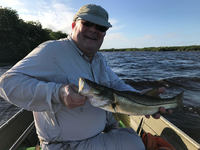 First Snook Ever! Caught with Nick Denbow (twcffs@gmail.com) FANTASTIC fish