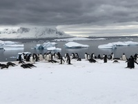 Meeting the penguins for the first time at the colonies on Cuverville Islan