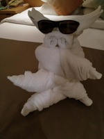 towel animals by Isaac